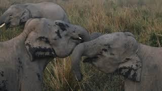 Kaziranga National Park | Assam | The India 100