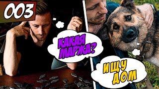 Серьги из эпоксидной смолы / Помощь бездомным животным! История собаки, которую сбила машина
