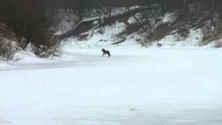 Встреча с волком на рыбалке.(, 2012-03-18T18:17:56.000Z)