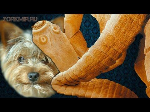 Дипилидиоз у собак | Симптомы | Лечение .