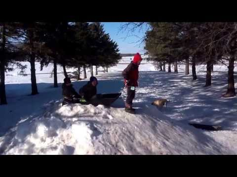 Ted the sled dog ( DANGEROUS )