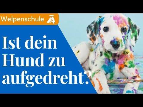 hyperaktiver Hund / entspannt An- und Ableinen / Mia and Me DogTV