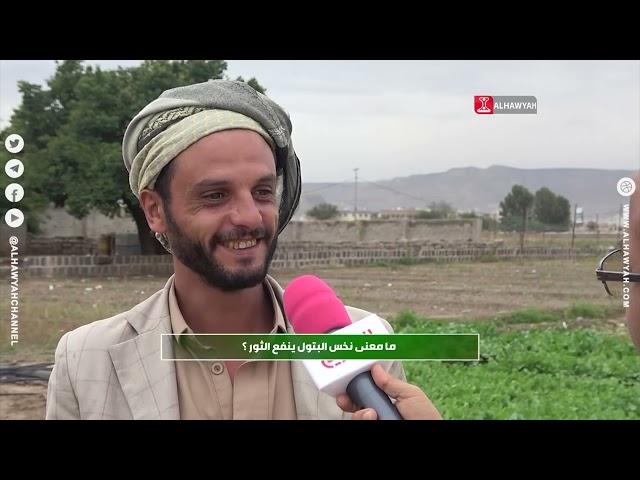 من زرع حصد   محصول الجندا .. البطاطس الحلوة   الحلقه 30   قناة الهوية