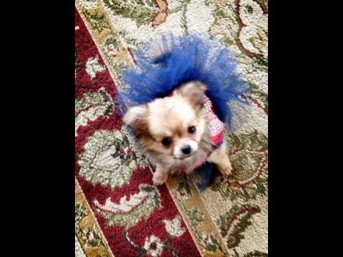 Puppy Haul For Jayce By Lovemyrebornbaby