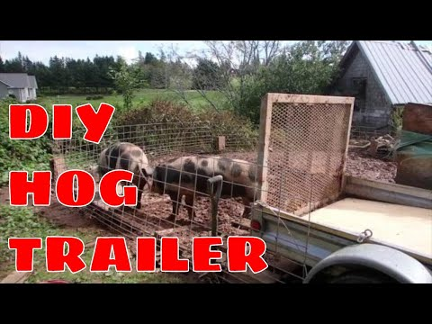 HAULING HOGS - An update on my DIY trailer used to haul the pigs