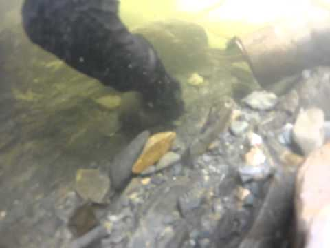 Alaska dredging april 2015