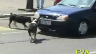 Dog Rips off license plate
