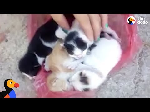 Kittens Abandoned in Trash Rescued Just in Time | The Dodo
