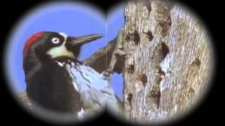 WeirdScienceWoodpecker