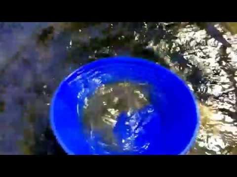 Western Washington Gold Prospecting Demo