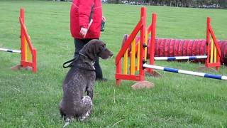German Shorthaired Pointer Lukas Agility Outtakes