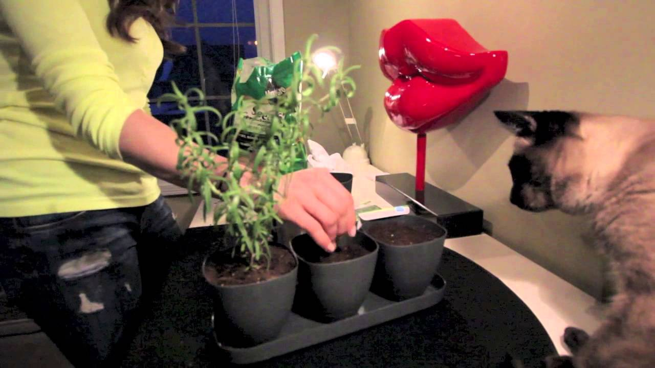 DIY Indoor Herb Garden For $10! Easy And Pretty!   YouTube