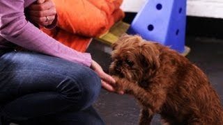 Easy Tricks to Teach | Dog Tricks