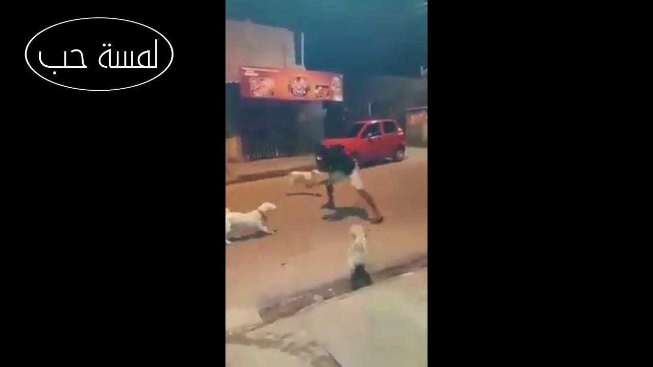 هذا الرجل قاتل الكلاب بقوة وشجاعة