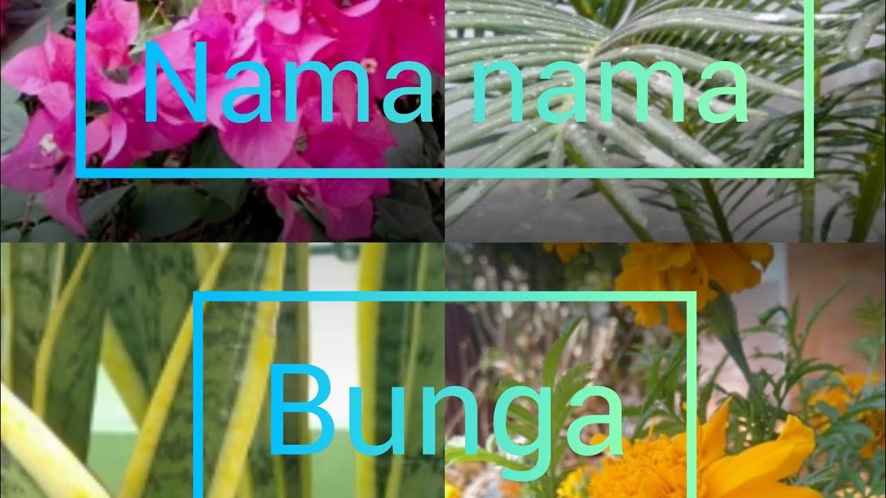 Nama Nama Bunga Di Indonesia Youtube