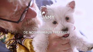 Le Monde de Jamy – Chiots, Chatons : Les premiers pas de nos animaux préférés ! Lundi 12/02 sur F3