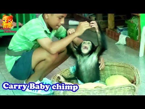 A boy carry baby chimpanzee