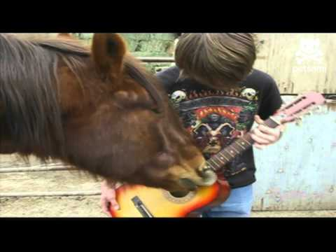 rock-n'-roll-horse-plays-the-guitar