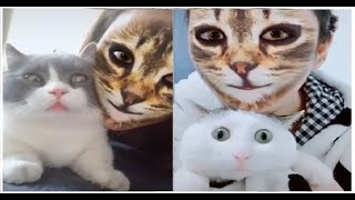Cat Filter |Cats Scared Of Cat Filter |Confused Cats| Funny Cats Video