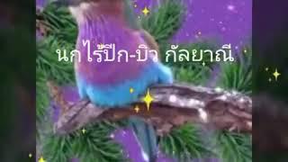 นกไร้ปีก บิว กัลยาณี