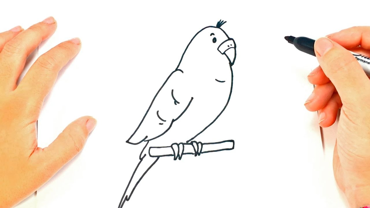 Como Dibujar Un Periquito Paso A Paso