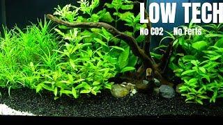 low tech aquarium 54l step by step