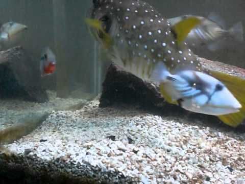 marine fish and fresh water fish together
