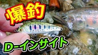 【爆釣】雨の日のD-インサイト!ゴルジュを越えるとお魚天国だった!『水中動画あり』