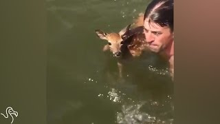 Guy Dives Into Lake To Save A Baby Deer