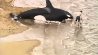 Katil balinalar