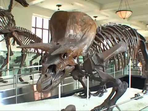 American Museum of Natural History in New York Dinosaurfilm