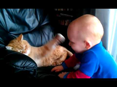Cat fight  with baby