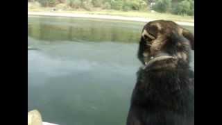 Собака в лодке