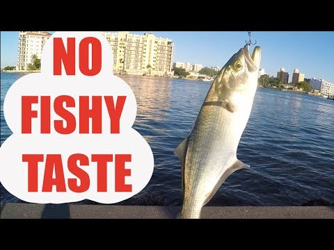 Best Bluefish Recipe Ever, NO FISHY FLAVOR (Catch And Cook)