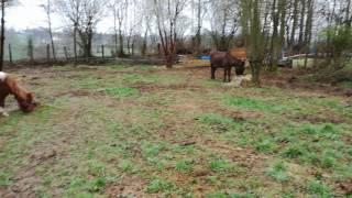 Les animaux du Refuge de L Espoir Mortain bocage Basse-Normandie