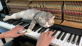 Best lullaby for meow (Meowssage) #2