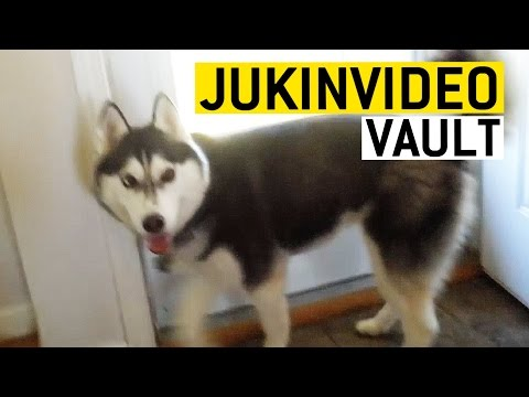 Funny Husky Videos from the JukinVideo Vault