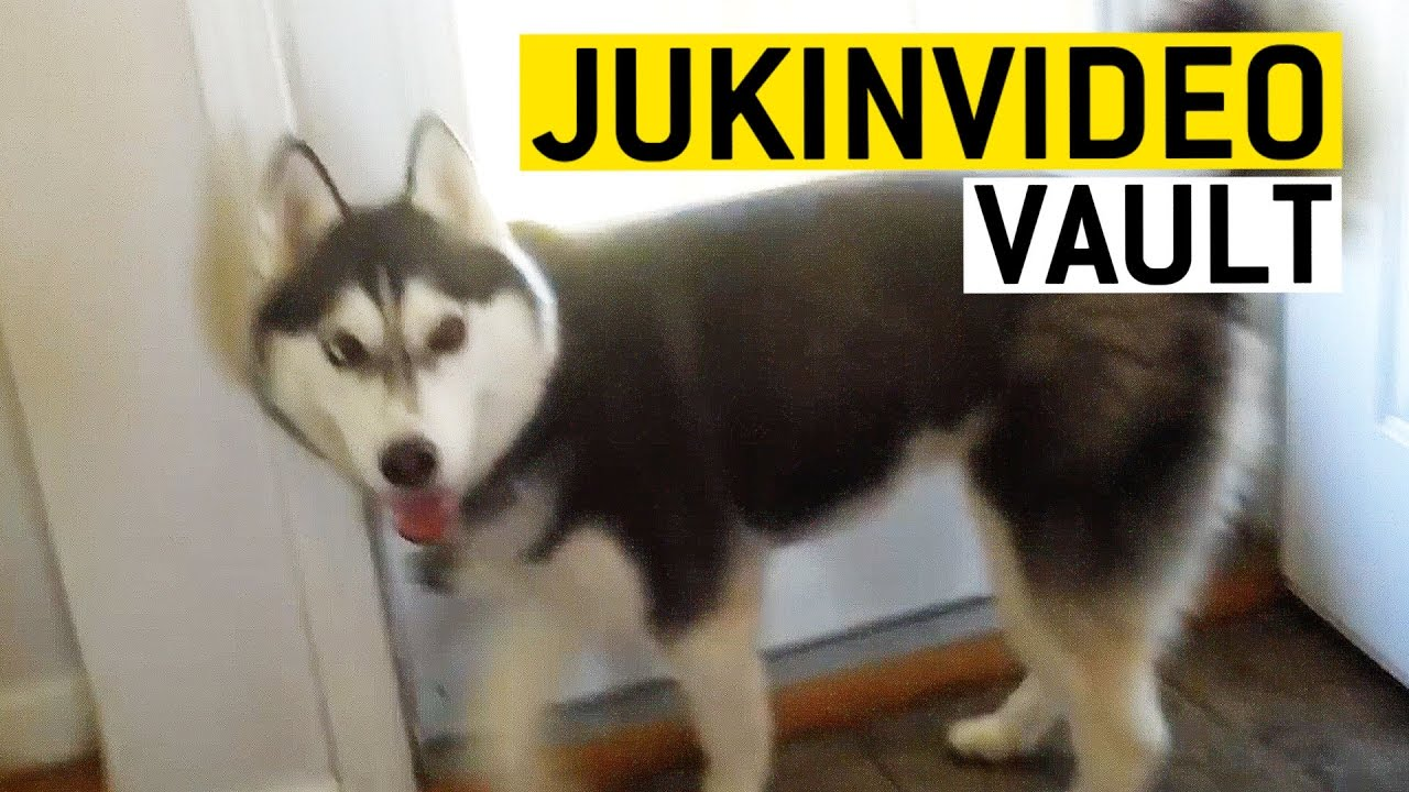 Humorous Husky Movies from the JukinVideo Vault