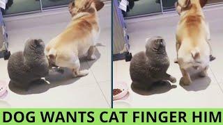 Cat fingers Dog's Ass