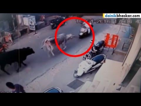OMG! Bull Attack Bike Riders in Punjab   Caught on Camera