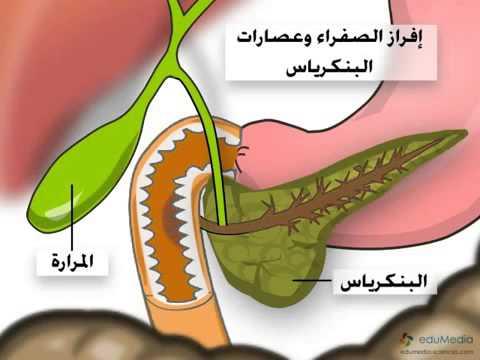 عرض توضيحي شرح الجهاز الهضمي