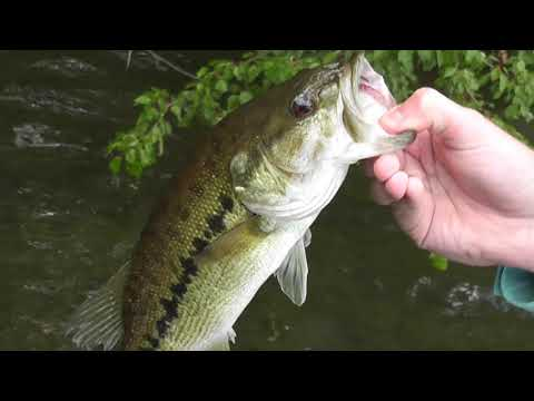 Bass Fishing, Lake Julian, Asheville, NC  5-31-2020!