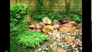 видео Каменистый сад своими руками: растения для сада, фото