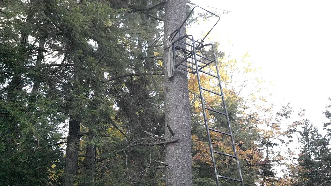 Comfort Zone Lookout Deluxe Ladder Tree Stand From Dick S