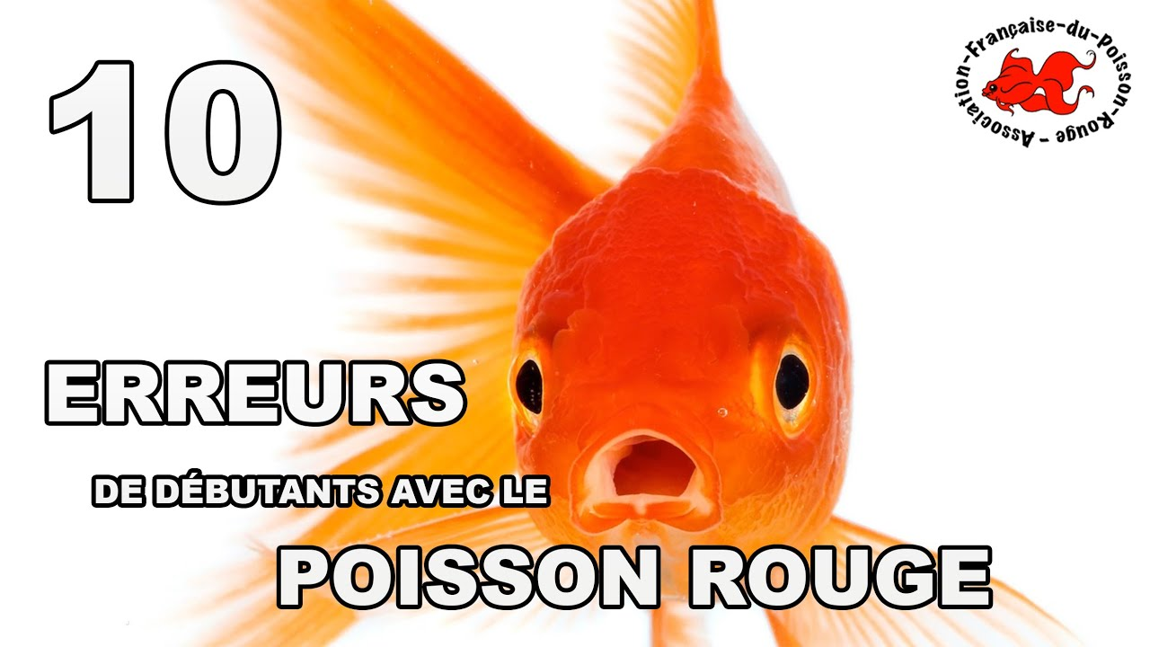 Poisson rouge 10 erreurs de d butant youtube for Aquarium 30l combien de poisson rouge