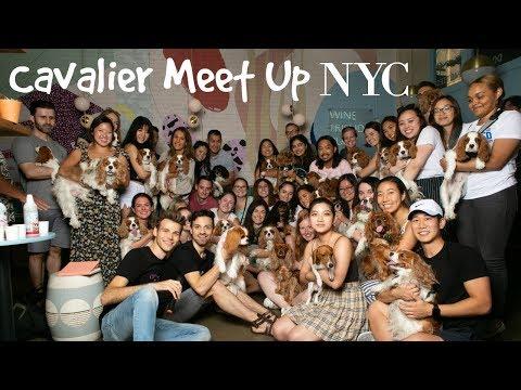 CAVALIER MEET UP NYC | CAVOLOGY POP UP