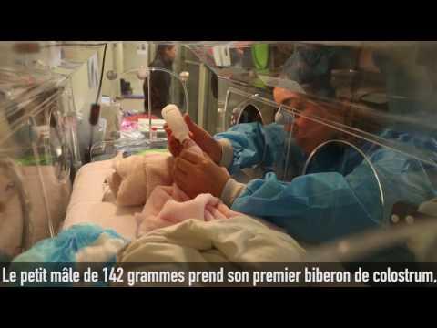 Naissance du #bébépandaBeauval