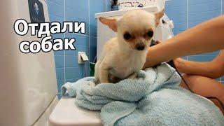 VLOG: Пришлось отдать собак / Как найти друзей