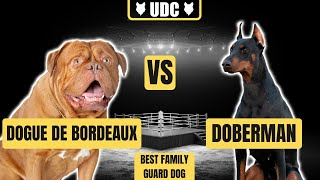 DOGUE DE BORDEAUX VS DOBERMAN! Which Is The Ultimate Family Guard Dog Breed!?!