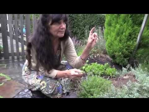Rosemary Gladstar's Garden Wisdoms: Sage and Thyme - YouTube